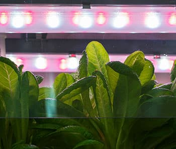 Our solutions for greenhouse lighting are used in a joint experiment with VNISI